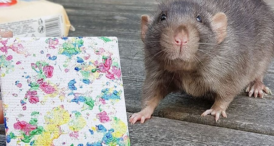 ratinho pintor